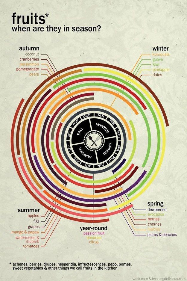 Fruits infographic