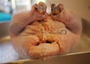 Prepare dalbakkegaard kylling