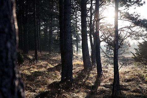 lav sol i skov